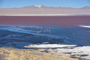 Colorata laguna colorada sull'altopiano altiplano in Bolivia foto