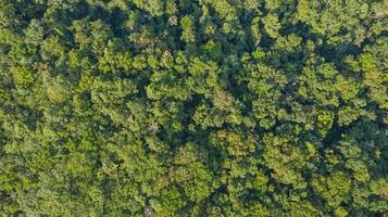 vista aerea superiore della vista del fondo di struttura della foresta dall'alto foto