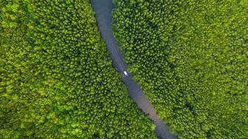 vista aerea dall'alto della barca sul fiume nella conservazione della foresta di mangrovie in Thailandia foto