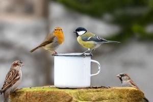 tre uccellini seduti sul bordo di una tazza di latta foto