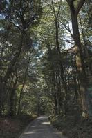 strada forestale in estate foto
