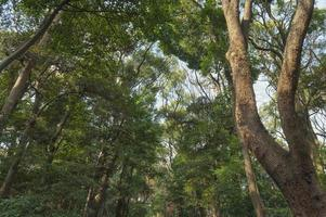 baldacchino dell'albero della foresta foto