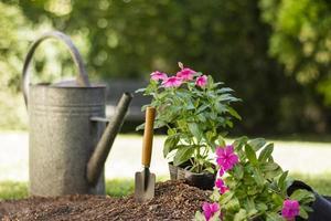 piante attrezzi da giardinaggio da vicino foto