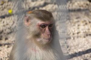 ritratto di una piccola scimmia foto