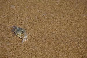 sfondo naturale con un piccolo granchio foto