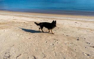 ritratto di un cane nero su uno sfondo di spiaggia foto