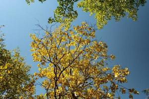 paesaggio autunnale con foglie gialle di alberi contro foto