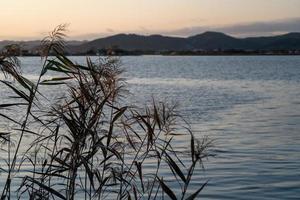 paesaggio con rami di canne sullo sfondo dell'acqua foto
