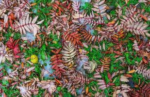 sfondo naturale con foglie gialle e rosse sull'erba foto