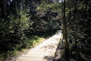 sentiero in legno nella foresta nella riserva naturale foto