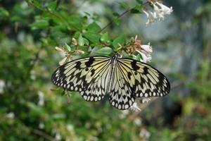 farfalla che si siede sui rami verdi nella serra foto