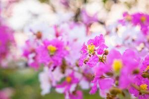 sfondo colorato fiore e fiore foto