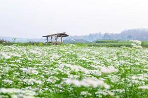 giardino fiorito bianco con sfondo fiore bianco foto