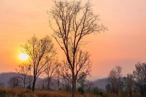 alberi e prati e sole mattutino foto