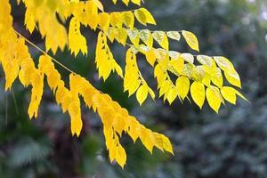 sfondo naturale con i rami degli alberi foto
