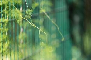 sfondo naturale con pianta arrancante sulle barre metalliche foto