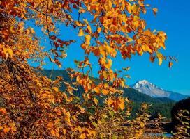 autunno oro - un pioppo tremulo nel lago di detroit - mt. jefferson in background - detroit, o foto