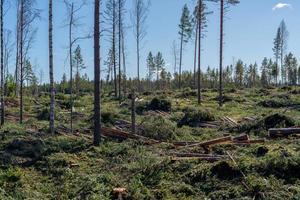 area di deforestazione appena realizzata in Svezia foto
