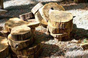 sfondo naturale con dischi di alberi tagliati foto