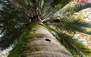 sfondo naturale con tronco di palma e foglie foto