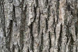 sfondo naturale con trama di corteccia di albero. foto