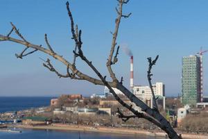 ramo di un albero senza foglie su sfondo sfocato del paesaggio urbano foto