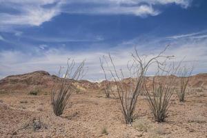 flora del deserto della baja california sotto un cielo nuvoloso blu in messico foto