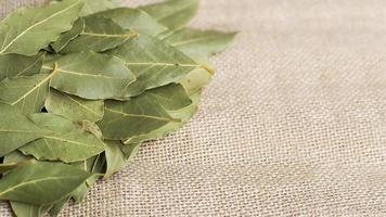 mucchio di foglie secche di alloro foto