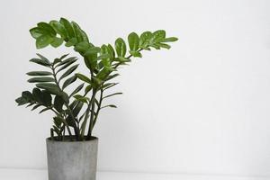 vaso della pianta sul tavolo da vicino foto
