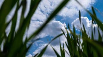 cielo blu e nuvole bianche vista dal basso con erba verde bellezza della natura, tempo di primavera foto