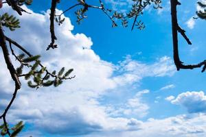 germogli di salice su sfondo blu cielo e nuvole bianche con spazio di copia foto