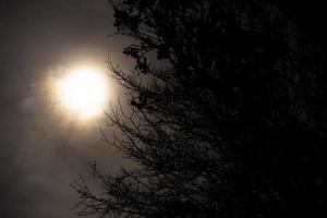 vista della luna piena con albero silhouette foto