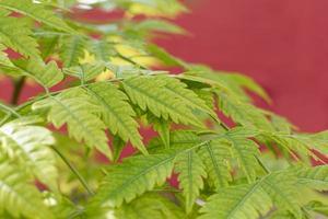 stretta di foglie verdi foto