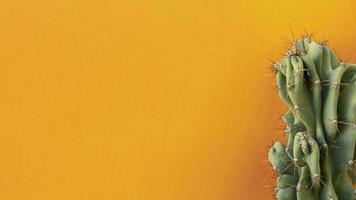 cactus su sfondo arancione foto