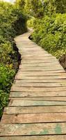 sentiero in legno nella foresta di mangrovie foto