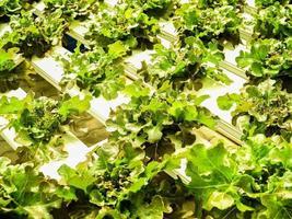 fattoria idroponica per il cibo foto