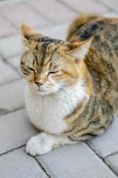 ritratto di un gatto foto