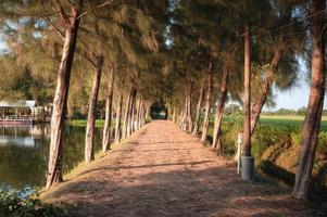 tunnel di alberi di pino e passerella con il sole vicino al lago la sera foto