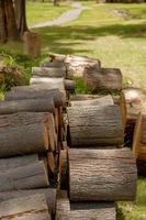 mucchio di tronchi di legno pronti per l'inverno foto