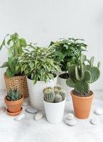 diverse piante da appartamento sul tavolo foto