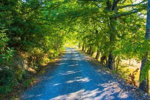 strada nella foresta verde foto