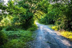 strada attraverso un bosco rigoglioso nei pressi della pieve di santo stefano foto