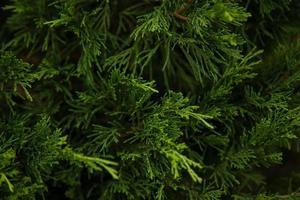 cornice di natale sullo sfondo dell'albero di natale foto
