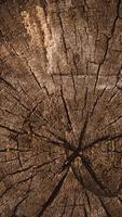 struttura di legno verticale del tronco d'albero tagliato foto
