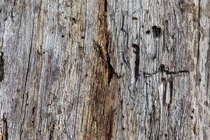struttura di legno vecchio marrone foto