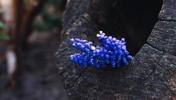 bouquet di fiori di lavanda su uno sfondo di legno foto