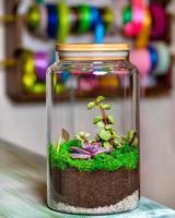 pianta del terrario in vaso di vetro foto