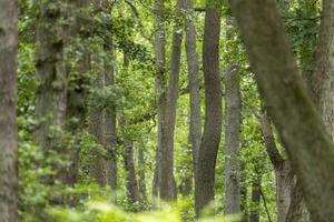 paesaggio della foresta brughiera tedesca con erba di felce e alberi decidui in estate foto