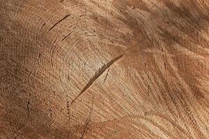 priorità bassa di struttura di legno scheggiato foto