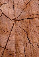 trama di sfondo in legno foto